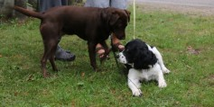 Emma and her friend the Springer Spaniel