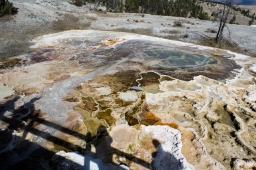 The top of one of the travertine terraces in Yellowstone National Park