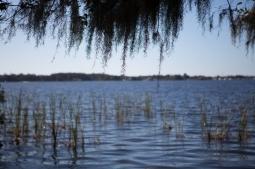 Lake Tarpon from John Chesnut Senior Park, Tarpon Springs, FL. / ©2016 Audrey Horn / www.usathroughoureyes.com