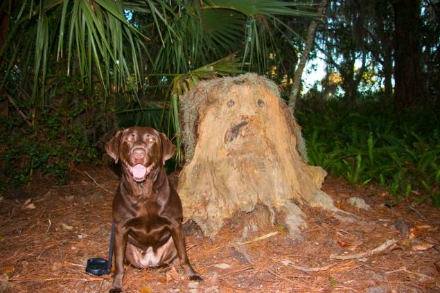 Emma enjoying vacation at Fred Howard Park, Tarpon Springs, FL. www.usathroughoureyes.com
