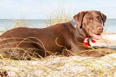 Emma enjoying vacation at Honeymoon Island State Park. www.usathroughoureyes.com