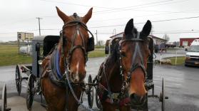 Horses Parked and Waiting. www.usathroughoureyes.com