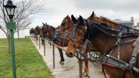 Amish Horses Parked and Waiting. www.usathroughoureyes.com