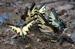 Blue Ridge Parkway - Butterflies. www.usathroughoureyes.com