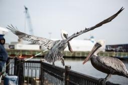 Palafox Pier, Pensacola, FL
