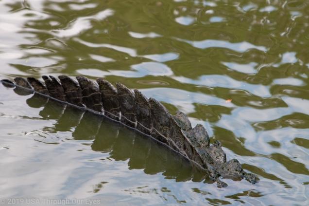 Gatorama, Palmdale, FL www.usathroughoureyes.com
